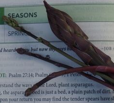 Today is the release day for the NIV God's Word for Gardeners Bible and what better way to celebrate a gardening book's spring debut than a devotion celebrating spring! Enjoy this excerpt from the Seasons theme, the first week of daily readings in the Garden Stories section. Read: Job 42:5 Thicken the Plot: Psalm 27:14; …