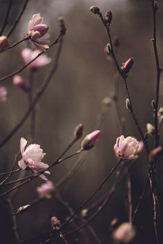 ❧ Couleur : Rose et brun ❧