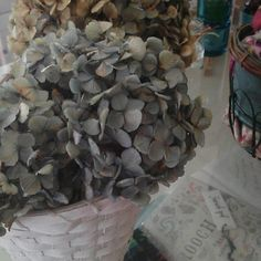 Japanese hydrangea Love Flowers, Hydrangea, How To Dry Basil, Herbs, Japanese, Texture, Crafts, Surface Finish, Manualidades