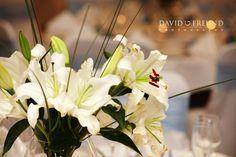 Quality Hotel Ballina - we will help make your dream wedding day come true. Dream Wedding, Wedding Day, Quality Hotel, Beach Resorts, Wedding Venues, Dreaming Of You, Weddings, Make It Yourself, Plants