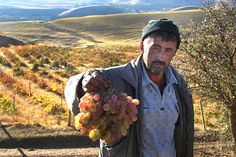 A field worker shows off his grape harvest in  rural Tajikistan.