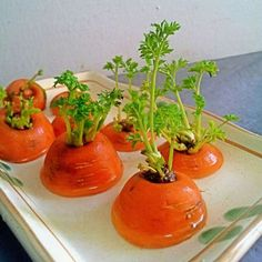 16 fruits et légumes à faire pousser à partir de leurs restes