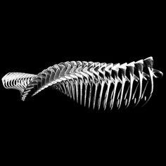 """""""BoneSkeleton"""" designed by MIMMEL / Melike Altınışık"""