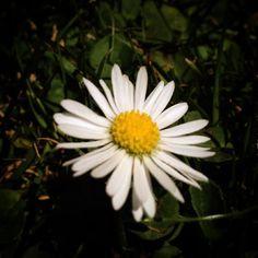 ...hace tiempo que no veía una de estas #flor #pasto #natural #simple