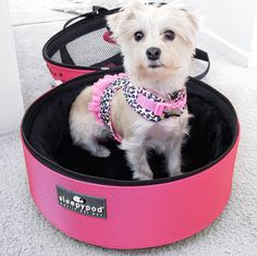 """Sharing a little puppy love from @pardonmuahpins - How cute is this Morkie named Heidi in her Blossom Pink Sleepypod? Check out the full Puppy Love post w/ beautiful images at http://www.pardonmuah.com/2016/08/puppy-love.html """""""
