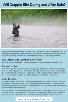 Will Crappie Bite During and After Rain: It's important to note that chances for crappies to bite during and after rain is quite low. It's always a good technique to wait for the water temperature to become warmer before carrying out your fishing activities. Crappie Fishing Tips, Fishing Tools, Kayak Fishing, Natural Structures, Small Fish, Kayaks, Fresh Water, Woods, Rain