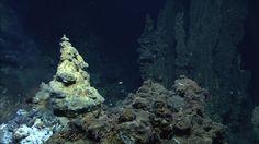 extraordinary deep ocean - Google 검색