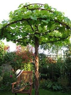 I have ornamental hops and sweet peas growing together on a trellis like this.  They are beautiful!
