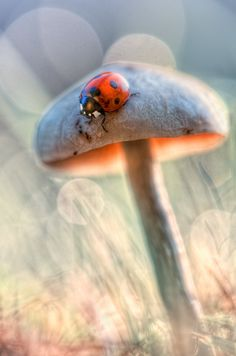 A ladybug in the smurfs country