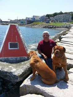 International border marker, Eastport me. Eastport Maine, Markers, Labrador Retriever, Places, Dogs, Animals, Train, Labrador Retrievers, Sharpies