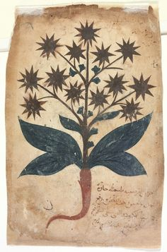 Online courses about astrology, herbalism, and magic Medieval Manuscript, Medieval Art, Nature Illustration, Botanical Illustration, Botanical Drawings, Botanical Prints, Plant Drawing, Painting & Drawing, Historia Natural