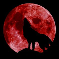 Blood Moon with Wolf (by Kalvicio de las Nieves) - Red moon with a wolf.