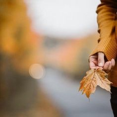 Autumn Day, Hello Autumn, Autumn Leaves, Winter, October Country, Autumn Photography, Photography Kids, Outdoor Photography, Fall Photos
