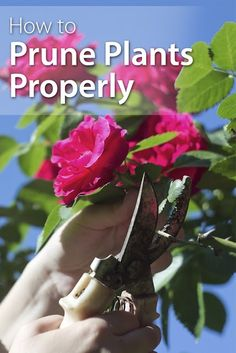 How To Prune Plants Properly