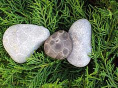 Petoskey stones, Petoskey Michigan (best to find them after the rain!)