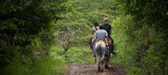 Tamarindo travel directory with info on tours, horseback riding, ATV, ziplining, turtle tours.