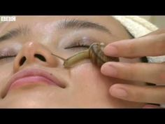 BBC News - Snail facials hit the Tokyo beauty scene Youtube, Facials, Bbc News, Beauty, Snail, Tokyo, Scene, Rice Mask, Best Face Mask