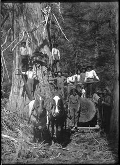Loggers with logging equipment VPL Accession Number: 1803 Date: 1904 Photographer/Studio: Gunterman, Ida Madeline Warner (Mattie) Content: Loggers standing on spring boards and on a log being pulled by horses in the Lardeau - Tom Milligan, extreme right. Cedar tree in Fish Creek valley provided a week's work to the hand logging crew - from 'Flapjacks and Photographs' by Henri Robideau 1995 p. 100 https://www.vpl.ca/find/cat/C393