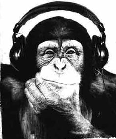 monkey c