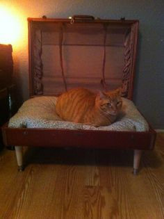 The Buddha bed.  And my super fat cat