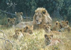 The Babysitter (Lion) by Carl Brenders LIMITED EDITION PRINT