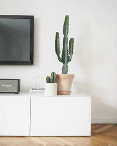 Cactus in huis op tv-meubel