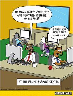 Cat Support Center