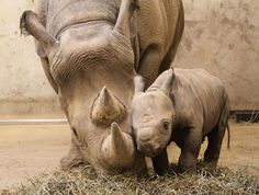 baby and mother | Animal Cognizance