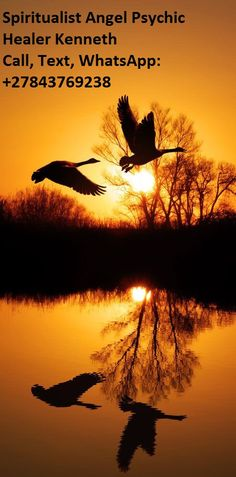 Birds and beautiful nature photography Beautiful Sunset, Beautiful Birds, Beautiful World, Beautiful Things, Amazing Photography, Nature Photography, Photography Composition, Sunrise Photography, Summer Photography