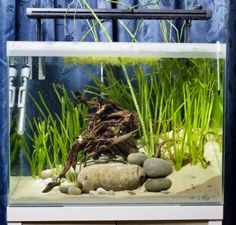 How to keep Dwarf puffer fish | Features | Practical Fishkeeping