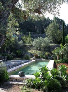 Piscine dans un petit jardin : idées et inspirations The small space is underlined by the importance of plants for an intimate pool area Outdoor Pool, Outdoor Gardens, Small Pools, Dream Pools, Beautiful Pools, Swimming Pool Designs, Cool Pools, Best Pools, Small Gardens