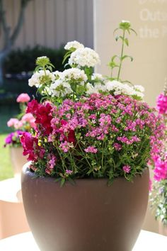 This+container+features+a+combination+of+dianthus+'Dash+White',+nemesia++'Deep+Pink'+and+snapdragon+'Solstice'. +Dianthus+'Dash+White'+is+located++in+the+back+and+has+a+great+fragrant+smell. ++Nemesia+'Deep+Pink'++blooms+in+the+front+of+the+container+and+comes+in+a+variety+of+colors.++Snapdragon+'Solstice',+on+the+left,+performs+best+in+cool+weather.