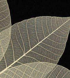 "Skeleton Leaves Natural 5"" Leaves (10 leaves/pkg)"
