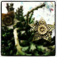Fleur de plante grasse Insects, Brooch, Animals, Jewelry, Gardens, Succulents, Green, Flowers, Animales