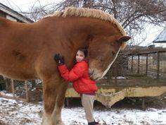 ahorseisnotahorse:  Massive horse giving girl a huge hug.