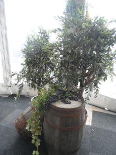Wijnvaten met olijfbomen