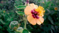 Forest Flower by Sirsendu Maiti on 500px