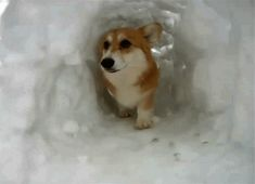 """""""This cave is my new home. I live here now because it's awesome."""" 