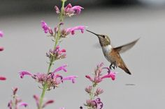 Looking for resources to plan a hummingbird or butterfly garden? Check out this post from SeEtta at the Birds & Blooms Blog.