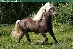 iceland horses - Google Search