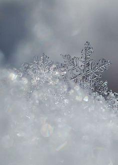 Snowcrystals — http://fineartamerica.com/featured/crystal-snowflak...