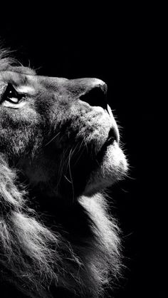 16 New Ideas Photography Wallpaper Phone Beautiful Lion Wallpaper Iphone, Cat Wallpaper, Animal Wallpaper, Iphone Backgrounds, Mobile Wallpaper, Black And White Lion, Black Cats, Lion Photography, Iphone Photography