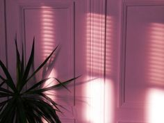 Pink, plants, and aesthetic image Aesthetic Colors, Aesthetic Images, Aesthetic Wallpapers, Summer Aesthetic, Wallpapers Rosa, Kitsch, Poster S, Pink Room, Everything Pink