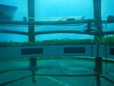 Basil, lettuce, and strawberries… grown in underwater greenhouses!