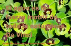 http://www.riomoros.com/2015/01/el-agua-es-la-fuerza-motriz-de-toda-la.html