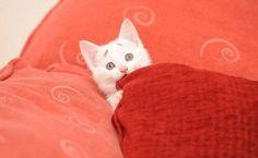 Kissa jolla on kulmakarvat - ällistyttävä näky! Cute Kittens, Cute Little Kittens, Cats And Kittens, Funny Animal Photos, Funny Animal Videos, Baby Animals, Funny Animals, Cute Animals, Maurice Careme