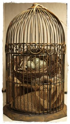 Bird Cage Assemblage with Nest and Eggs by lisaleo on Etsy, $45.00