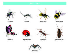 Putukad Estonian Food, Bee, Teaching, Languages, Europe, Animals, School, Books, Idioms