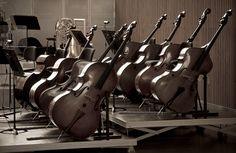 Double Bass, Contrabajo, Contrabass,  Counterbass, Bass fiddle