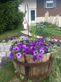 Half whiskey barrel planter,..